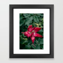 Fragile Pink. Framed Art Print