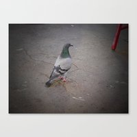 pigeon Canvas Prints featuring Pigeon by blu leaf