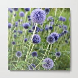 BLUE FLOWERHEADS - Botanical Garden Metal Print