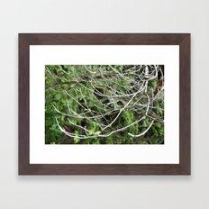 A Frail Grasp Framed Art Print