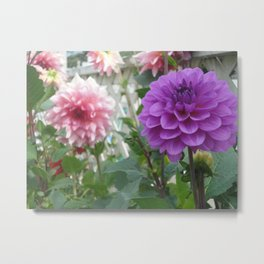 Purple Dahlia Focus Metal Print
