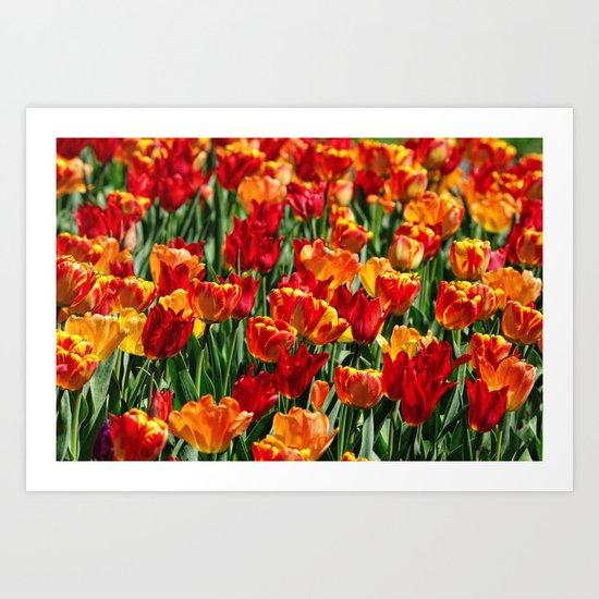 Field of Spring Tulips Art Print