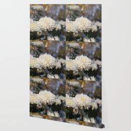 Fluffy flurries of white Chrysanthemum flowers Wallpaper