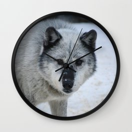 Lone wolf roams the Canadian Rockies Wall Clock