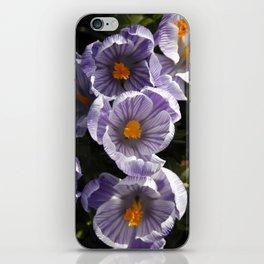 Spring Crocuses iPhone Skin