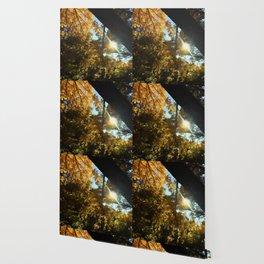Fall Swirly Yellow Leaves in Sunlight Wallpaper