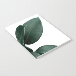 Rubber fig Plant Notebook