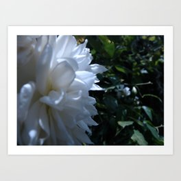 Flowers #18 Art Print