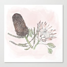 Banksia and Protea blush pink Canvas Print