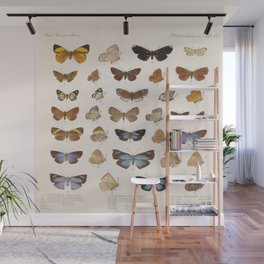 Vintage Scientific Insect Butterfly Moth Biological Hand Drawn Species Art Illustration Wall Mural