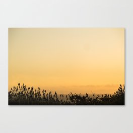 Lavender at Sunset Canvas Print
