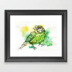 Australian Green Catbird  Framed Art Print