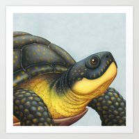 A Blanding's Turtle Story Art Print