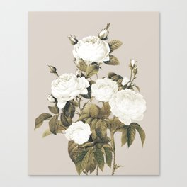 Minimal Whiterose Canvas Print