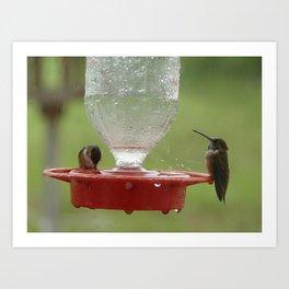 Hummingbirds in the Rain Art Print
