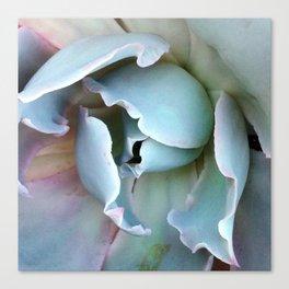 Folds - Succulent Canvas Print