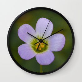 lilac oxalis close up Wall Clock