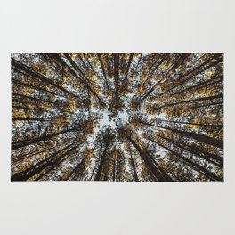 Pines Above Rug