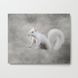 Albino Squirrel Metal Print