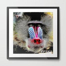 Primate Models: Mandrill Baboons 01-02 Metal Print