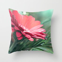 Fresh beautiful red Gerbera flower on textured leaves background Throw Pillow