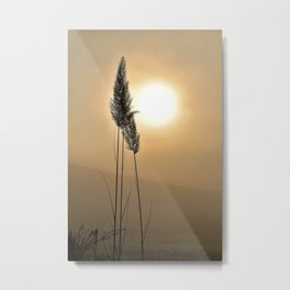 Grass in the Light Metal Print