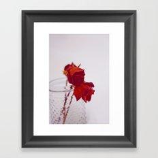 red rose. Framed Art Print