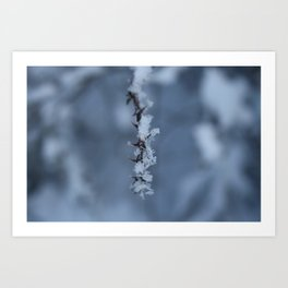 Ice Flowers Art Print