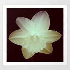 Daffodil 3 Art Print