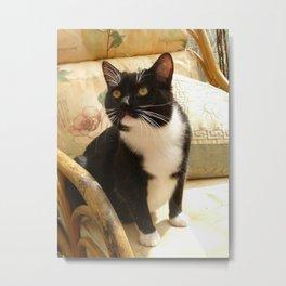 Socks the kitty Metal Print