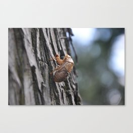 empty shell Canvas Print