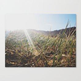 sandy grass. Canvas Print