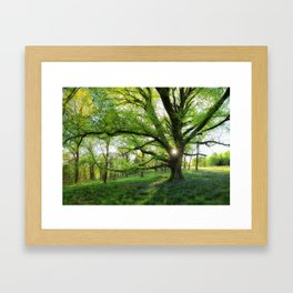 To Swing On The Tree Of Hope Framed Art Print