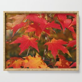 Fiery Autumn Maple Leaves 4966 Serving Tray