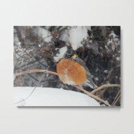 First snow robin Metal Print