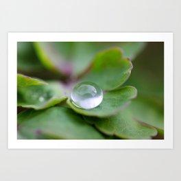 Waterdrop Macro Art Print