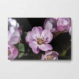 Pink Pastel apple blossoms Metal Print