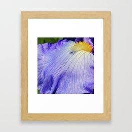 Blue Violet Iris Petal Close up Framed Art Print