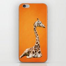 Giraffe on Orange iPhone & iPod Skin