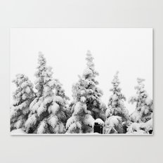 Snow Covered Pines Canvas Print