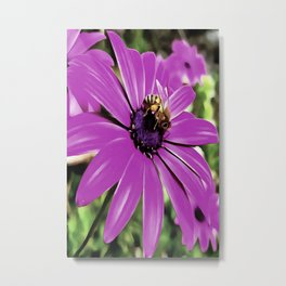 Honey Bee On A Spring Flower Metal Print
