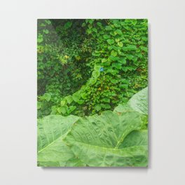 Florida: Lush Forest 1 Metal Print