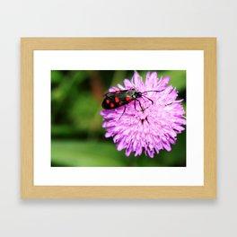 Insect on purple flower Framed Art Print