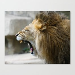 Lion Roar  Canvas Print