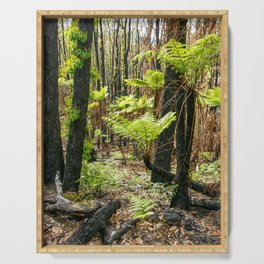 Rebirth After Bush Fire, Country Victoria Serving Tray