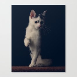 Miguel the Cat 2 Canvas Print