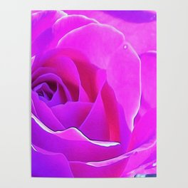 Pretty Round Pink and Purple Rose on Blue Painting Poster