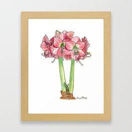 Amaryllis in Bloom Framed Art Print