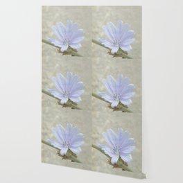 cichorium  Wallpaper