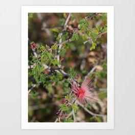 Desert Wildflower Bush Art Print